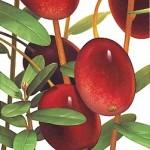 cranberrie