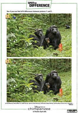 chimpanzee spot difference
