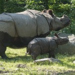 See What's Happening at the Bronx Zoo in September! #BronxZoo