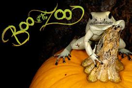 boo twin frog 2013