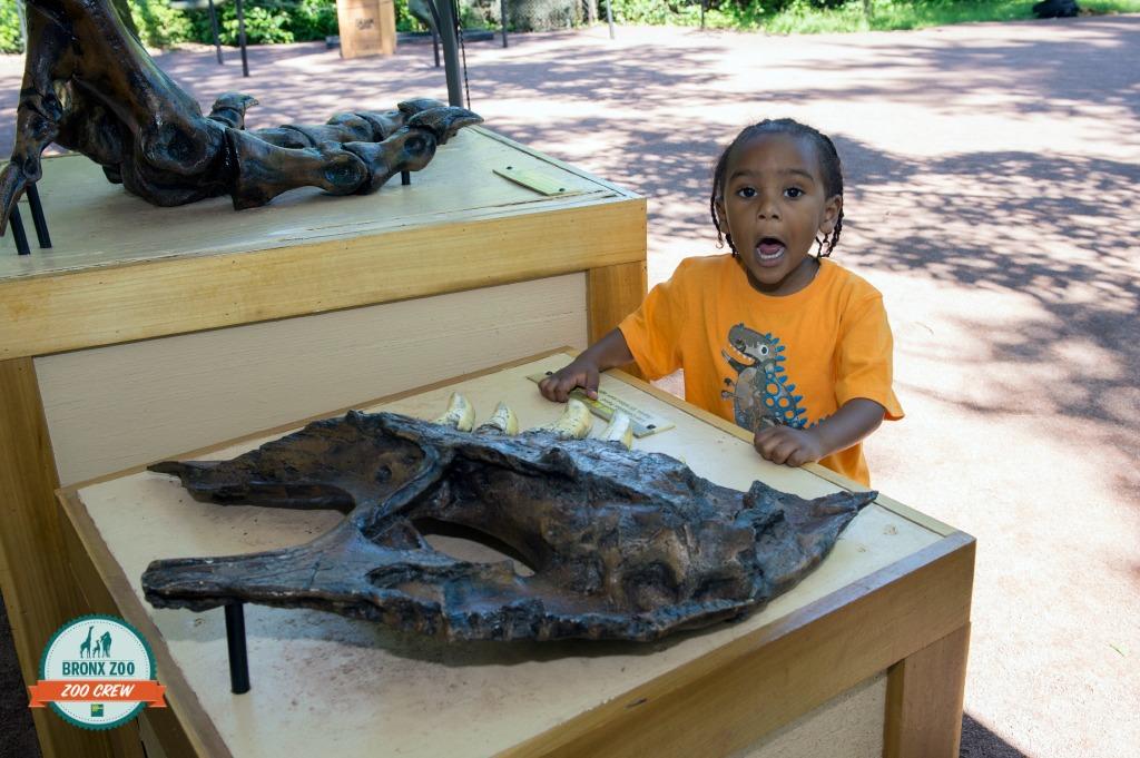 _Julie Larsen Maher 2519 Dinosaur  Safari and Dig with Visitors BZ 2